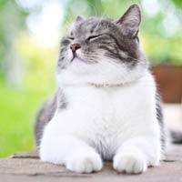Товары для здоровья и красоты кошек