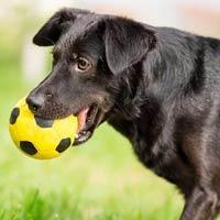 Товары для здоровья и красоты собак