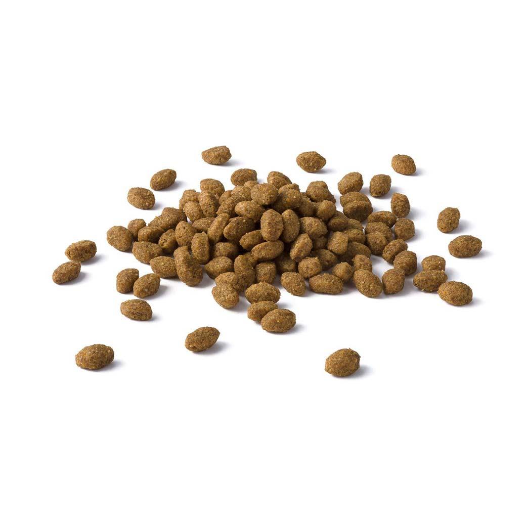 Купить корм для стерилизованных собак